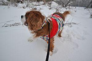 008雪散歩1