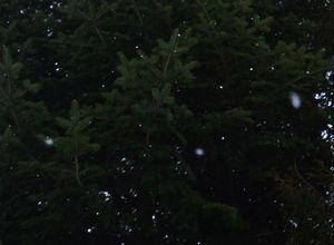 010小雪