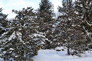 001雪景色