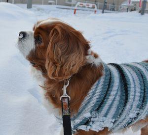 004雪散歩3