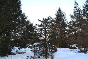 001にゃんたの木