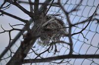 005鳥の巣