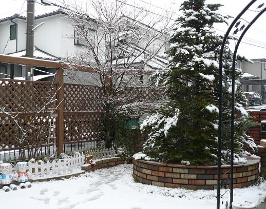 P1380310_2月8日 雪