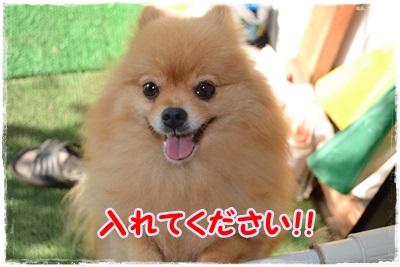 DSC_1158_20130719195838.jpg