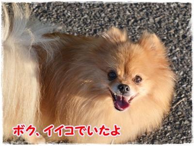DSC_1292_20131117220252c64.jpg