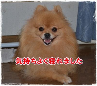 DSC_1297.jpg