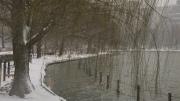 雪の日 揺れる柳