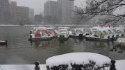 雪の日 お池はお休み