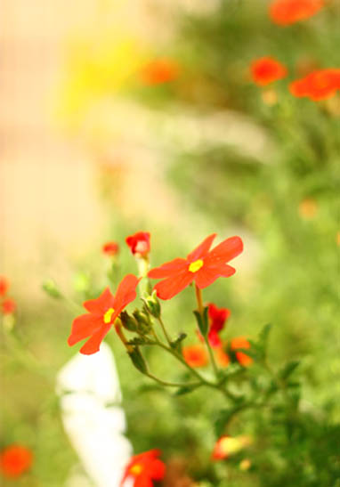 sunbrittenia3.jpg