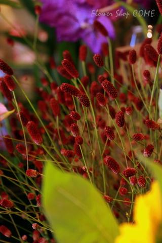 秋の花 ワレモコウ