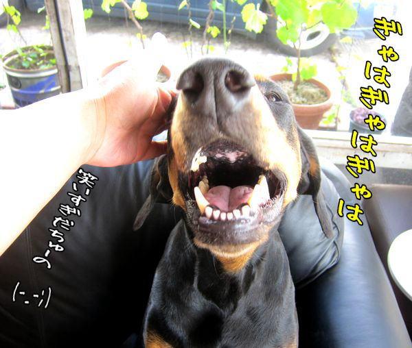 sakihodohadoumo4.jpg