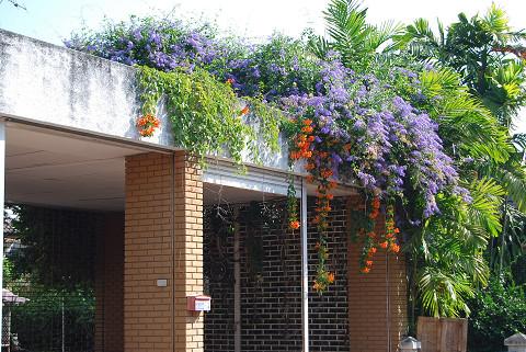 住宅地の花園