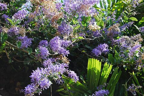 紫色の花が