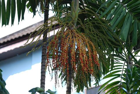 ココナッツの花か