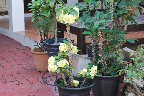 トゲトゲの花