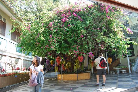 エレベータ前の花々