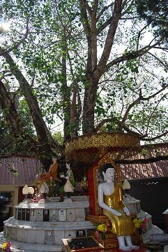 寺院前の「生命の木」