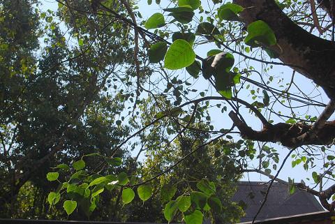生命の木の葉を