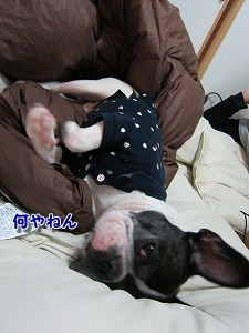 爆睡 (4)