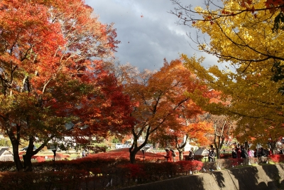 shuku-IMG_4760.jpg