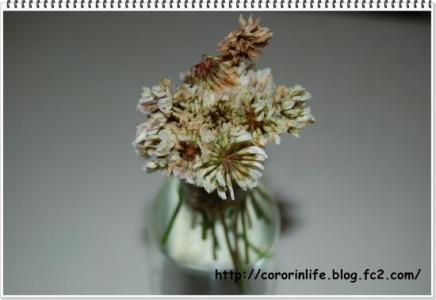 DSC_0049_convert_20130615135147.jpg