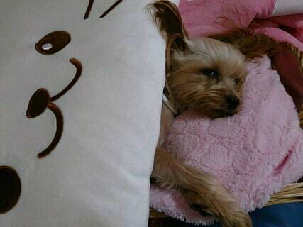 クラリスそらのベッドをかけて寝る3