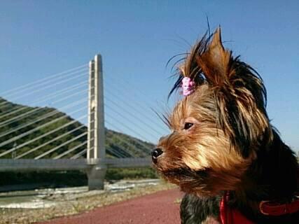 13.10.28そらの散歩新幹線吊り橋と1