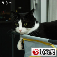 dai20141020_banner.jpg