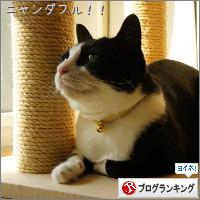 dai20141024_banner.jpg