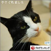 dai20141028_banner.jpg
