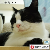 dai20141029_banner.jpg