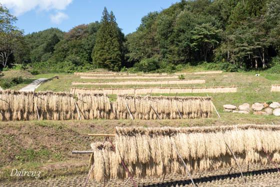 みなかみ町真沢の棚田 はさ掛けの稲