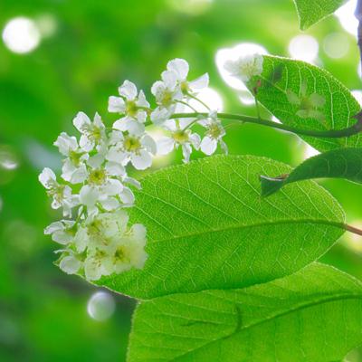 春採湖の花-0473