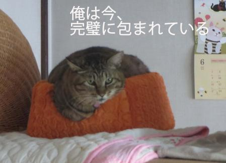 おっさんキューブベッドをうばう。