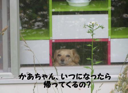 おっさん犬待ちわびる