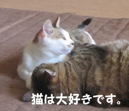 おっさん猫大好き