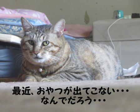 おっさん猫かたひとこと