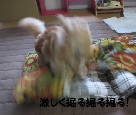 おっさん犬のまぼろし