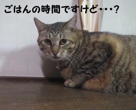 腹減りおっさん猫