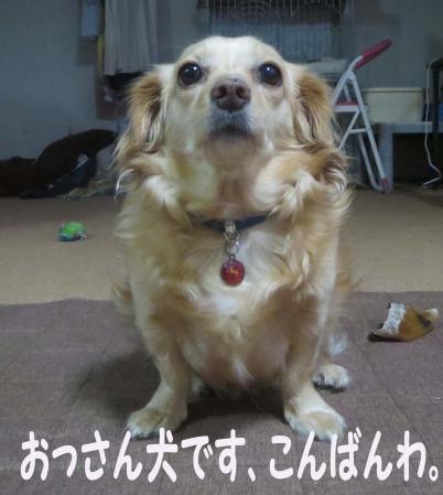 犬のおっさん
