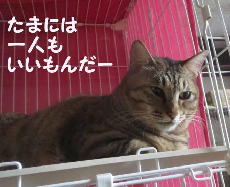おっさん猫心のつぶやき
