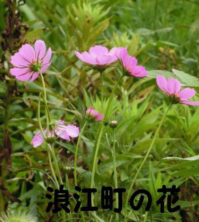 浪江町の花