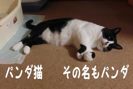 ぱんだっち