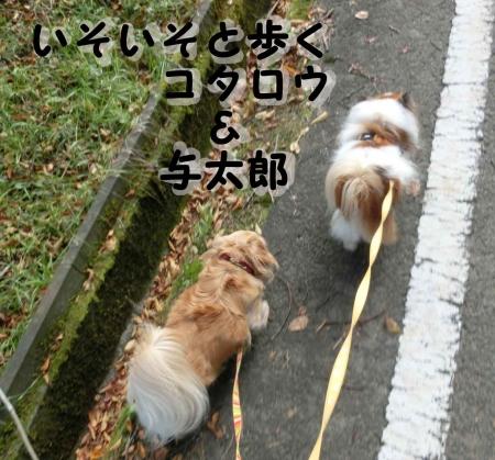 二匹でお散歩うれしいな。