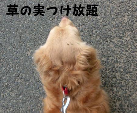 草の実飾ったおっさん犬