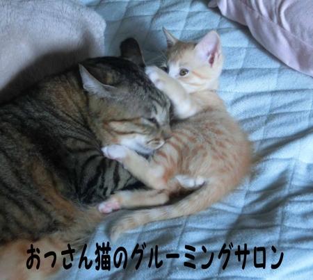 サロン ド おっさん猫
