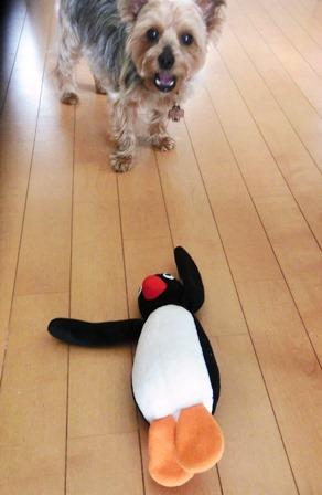 0703-penguin2.jpg