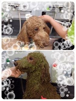 12リンジー入浴