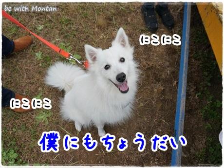 バナーDSC07632-20131104