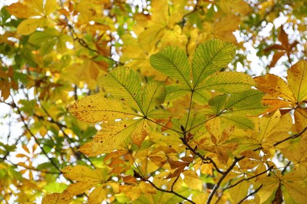 大きな葉っぱ。なんだろう?